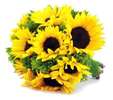 sunflowers smaller